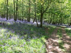 Flakebridge Woods in May