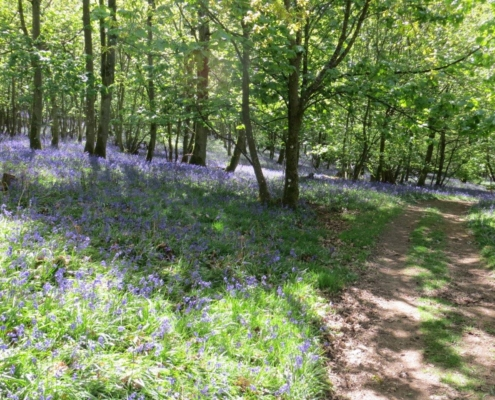 Flakebridge Woods in May