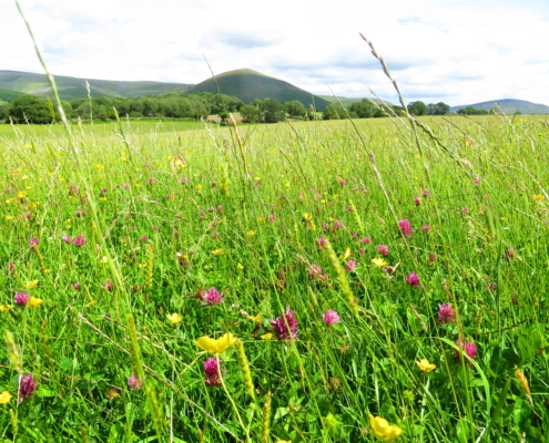 Meadows around Dufton